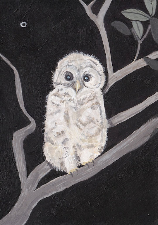 CGEE014_owl
